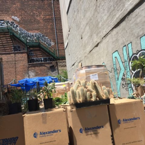 Outdoor 'Cactus Store' Sets up Shop in Vacant Essex Street